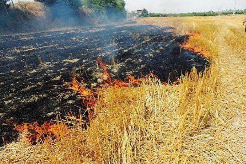 خبرنگاران 22 هکتار از مزارع گندم آبی گیلانغرب در آتش سوخت