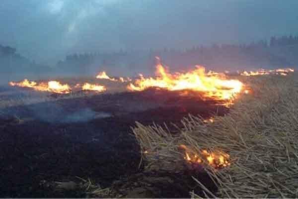 تشکیل 20 پرونده قضایی آتش زدن کلش مزارع در بیله سوار